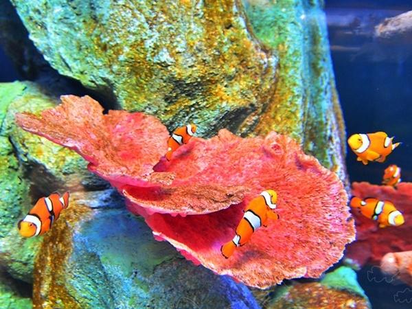 chiang-mai-zoo-aquarium-3