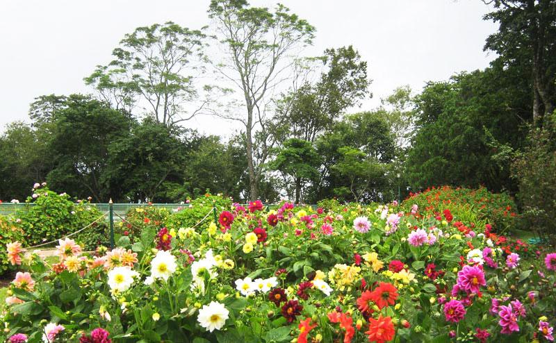bhubing-palace-chiangmai-1