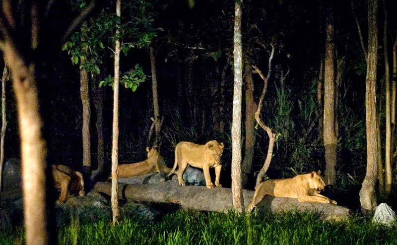 chiangmai-night-safari-10