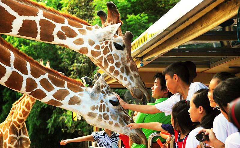 chiangmai-night-safari-8