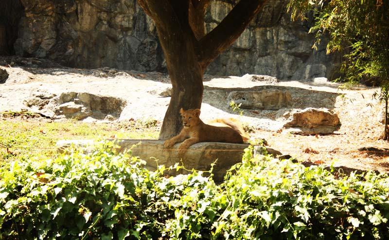 chiangmai-zoo-14