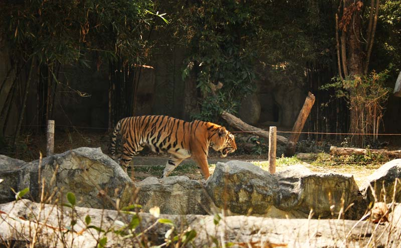 chiangmai-zoo-15