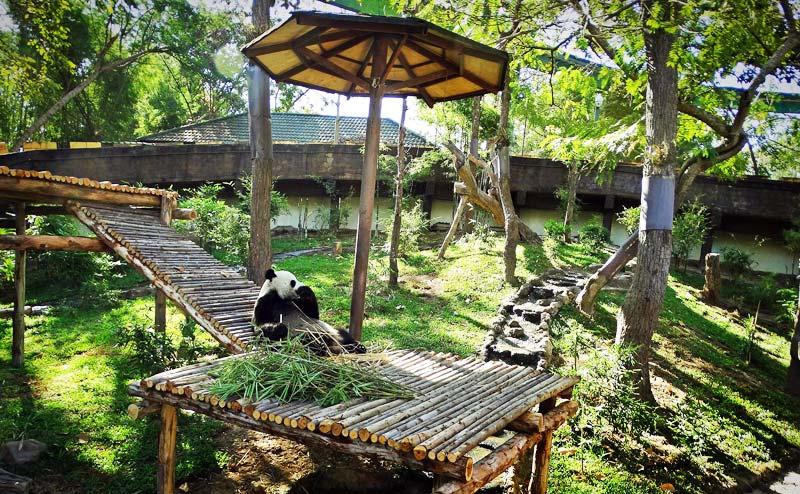 เที่ยวสวนสัตว์เชียงใหม่ ชมแพนด้า อควาเรียม  Chiang Mai Expert