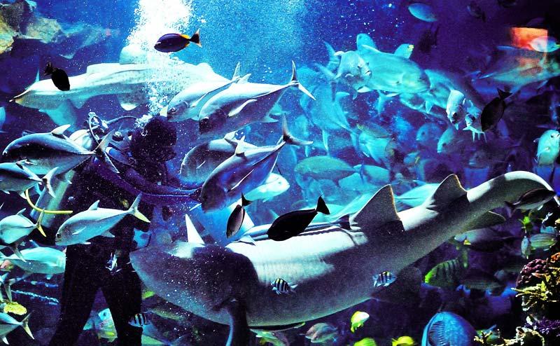 chiangmai-zoo-aquarium-2