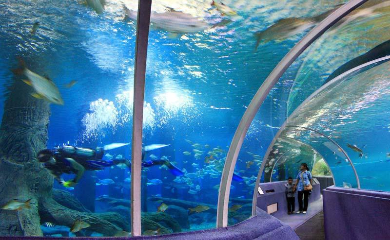 chiangmai-zoo-aquarium-7