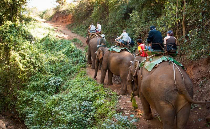 elephant-riding-chiangmai-1-1