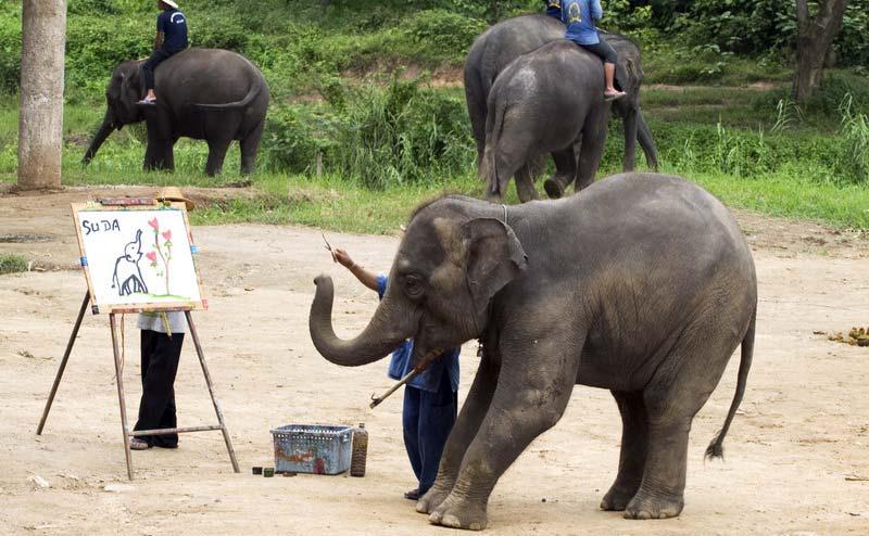 elephant-show-chiangmai-1