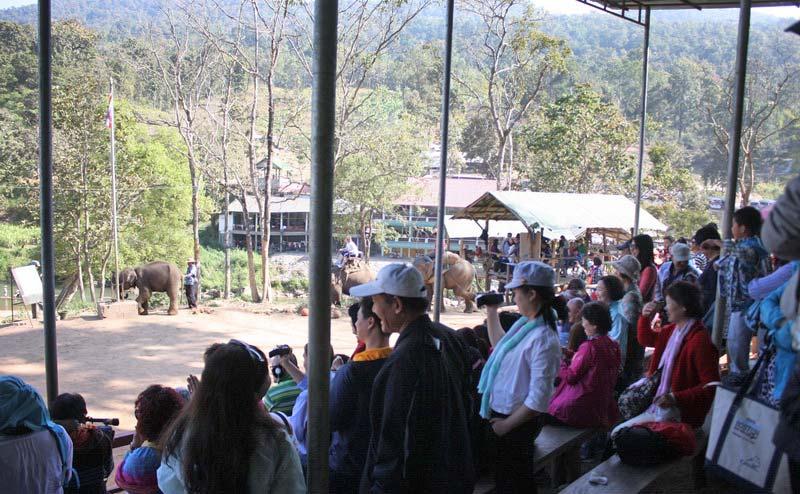 elephant-show-chiangmai-7