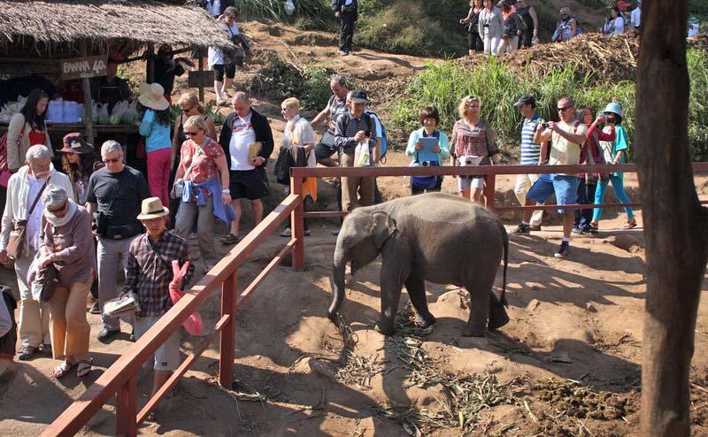 elephant-show-chiangmai-8