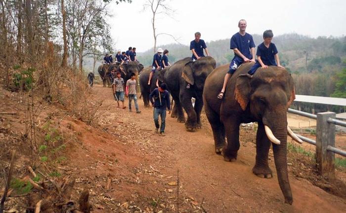 baan-chang-elephant-park-chiangmai-15