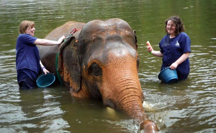 baan-chang-elephant-park-chiangmai-21