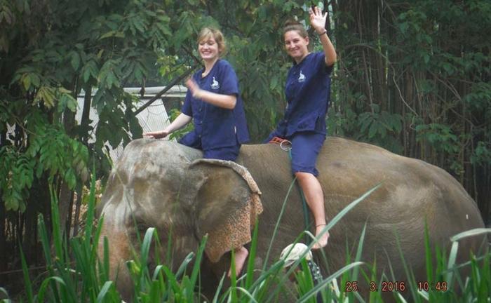 baan-chang-elephant-park-chiangmai-4