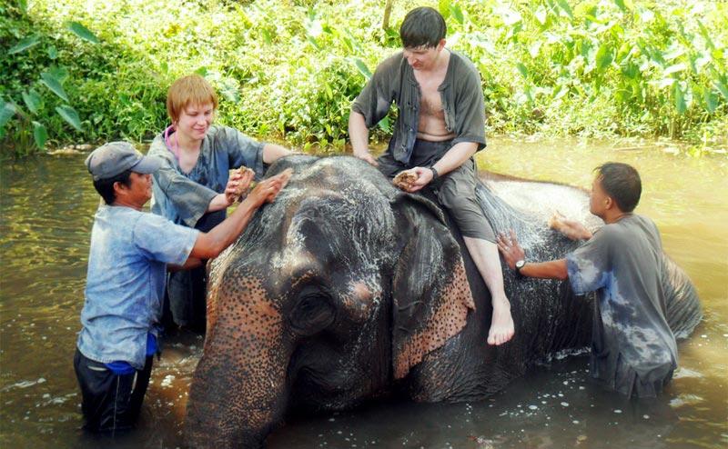 elephant-bathing-chiangmai-1