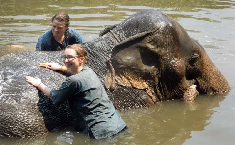elephant-bathing-chiangmai-13