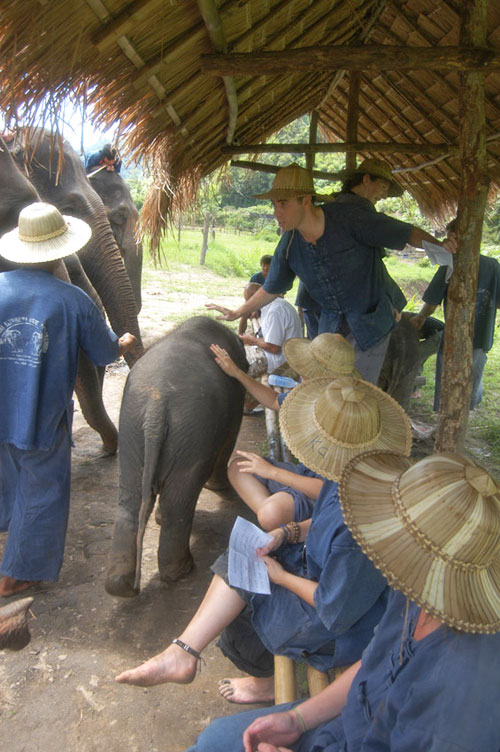 elephant-bathing-chiangmai-16