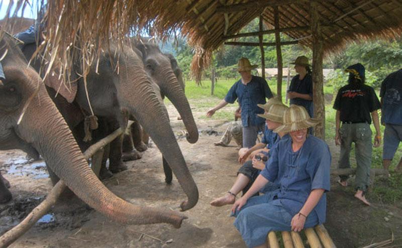 elephant-bathing-chiangmai-18