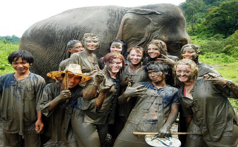 elephant-bathing-chiangmai-2