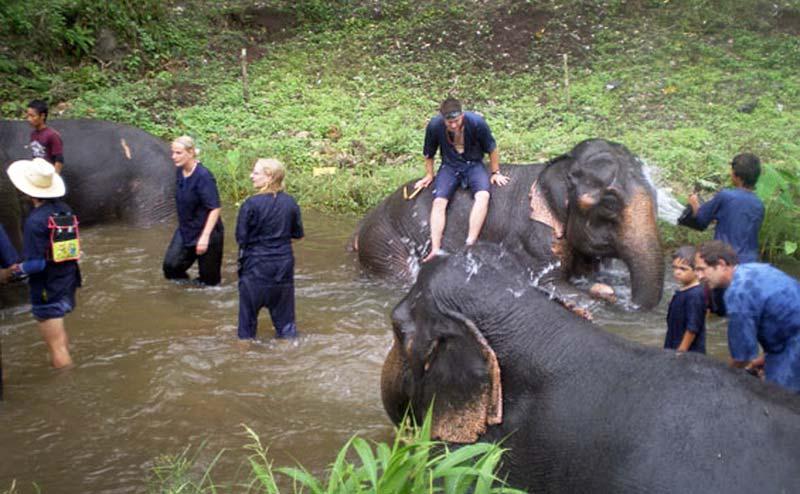 elephant-bathing-chiangmai-6