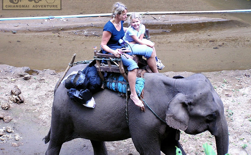elephant-riding-chiangmai-2