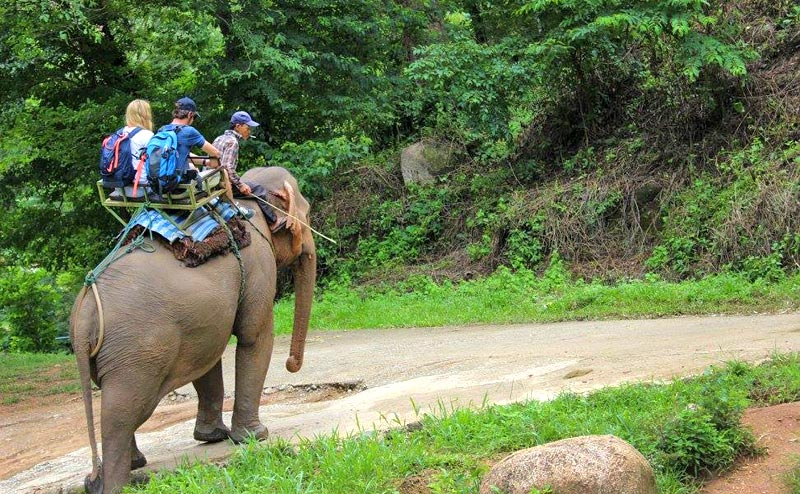 elephant-riding-chiangmai-3-1