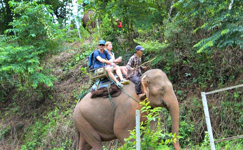 elephant-riding-chiangmai-5