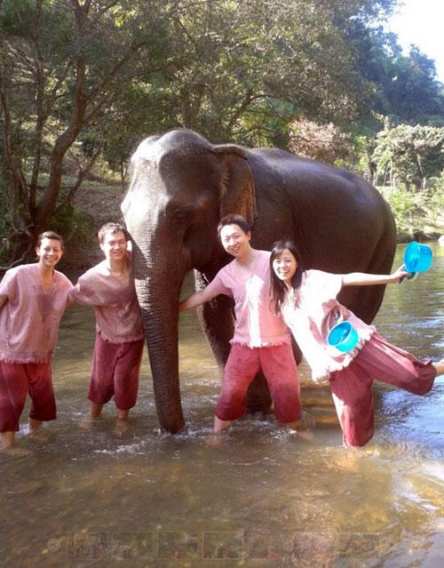 elephant-training-chiangmai-2