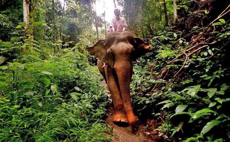 elephant-training-chiangmai-7