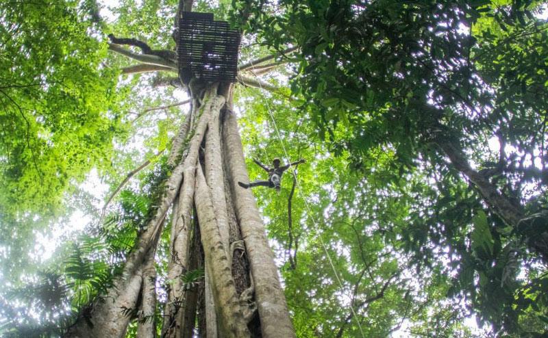 flight-of-the-gibbon-chiangmai-10