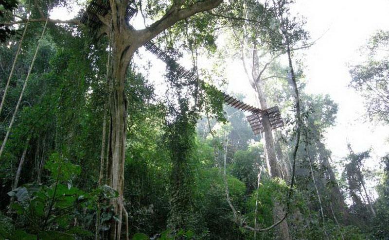 flight-of-the-gibbon-chiangmai-3