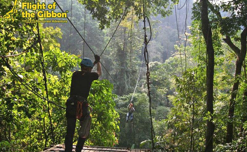 flight-of-the-gibbon-chiangmai-8