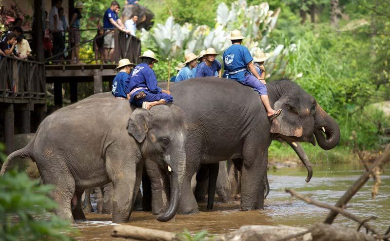 maesa-elephant-camp-chiangmai-12