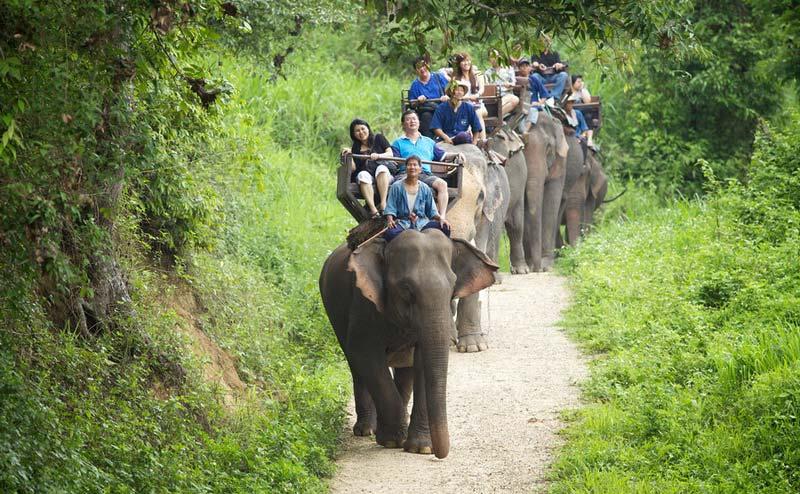maesa-elephant-camp-chiangmai-14