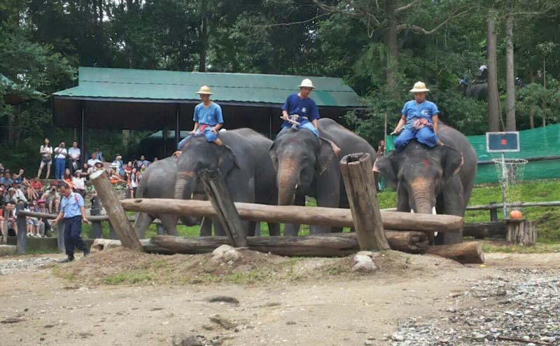 maesa-elephant-camp-chiangmai-17