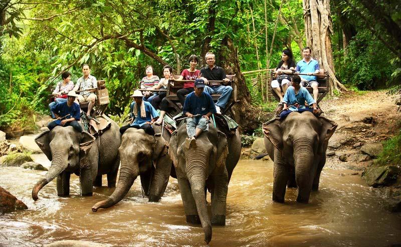 maesa-elephant-camp-chiangmai-2-1