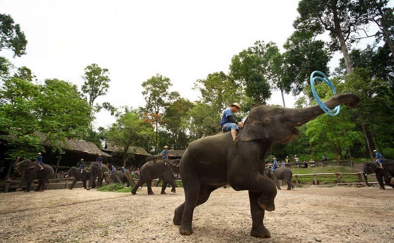 maesa-elephant-camp-chiangmai-5-1