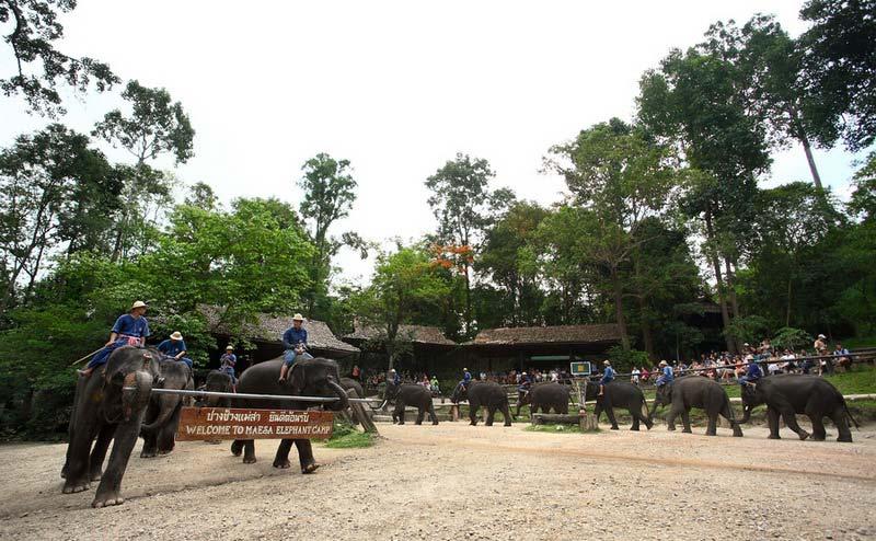 maesa-elephant-camp-chiangmai-6-1