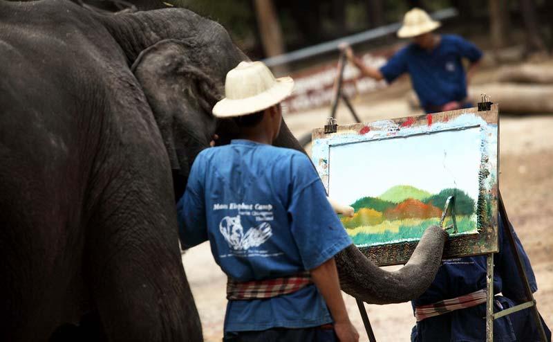 maesa-elephant-camp-chiangmai-7-1