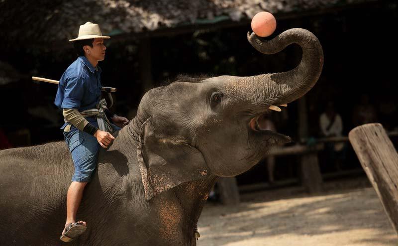 maesa-elephant-camp-chiangmai-9
