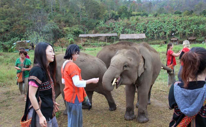 rantong-elephant-camp-chiangmai-13
