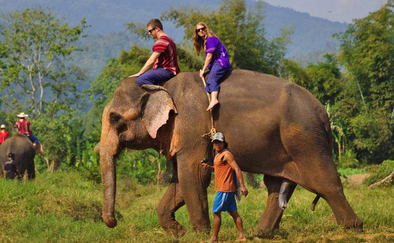 rantong-elephant-camp-chiangmai-19