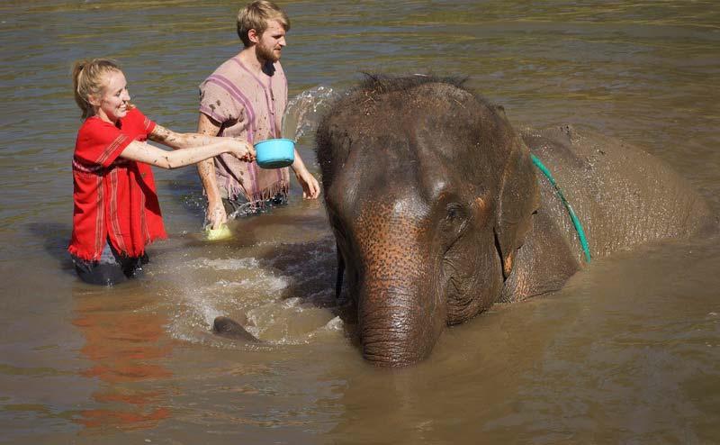 rantong-elephant-camp-chiangmai-5