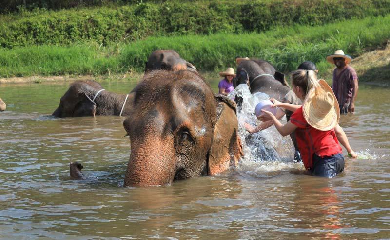rantong-elephant-camp-chiangmai-6