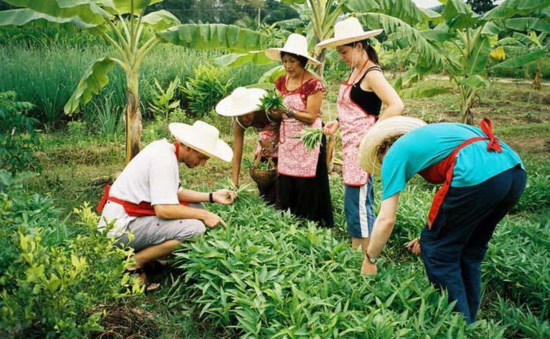 thaifarm-cooking-school-chiangmai-4
