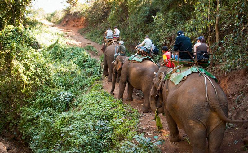 elephant-riding-chiangmai-1-2