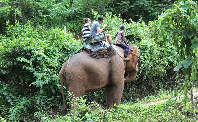 elephant-riding-chiangmai-6-1