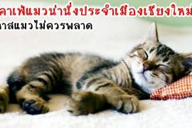 Sleeping-Cat1