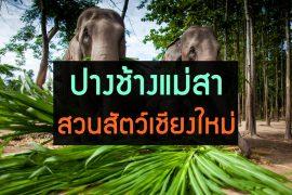 elephant-zoo