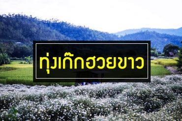 gekhuay