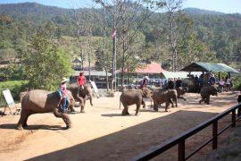 elephant-show-chiangmai-11