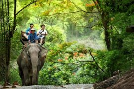 chiang-mai-elephant-at-work-smile